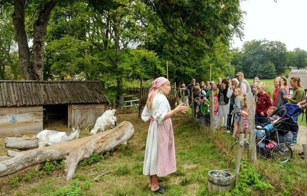 Visning av Östarps lantrasdjur är en av flera visningar som erbjuds under Östarpsdagen. Här berättar gårdsbrukare Emma Johansson om Göingegetterna. Foto: Viveca Ohlsson/Kulturen