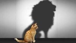 Représentation de la formation : Savoir s'affirmer avec assertivité