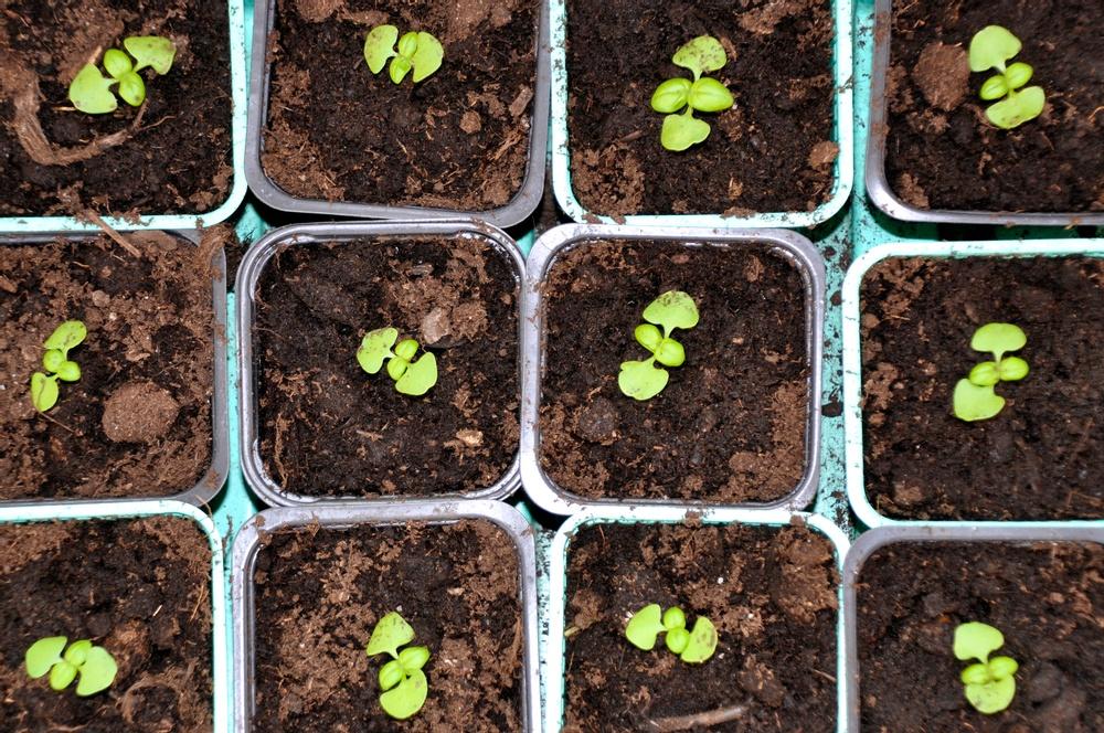 Växter som gror. Foto: Ann-Christine Eliasson