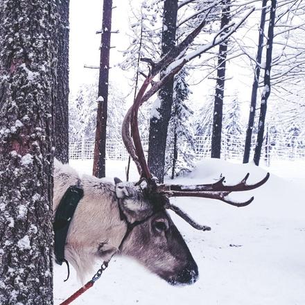 Finnish Wilderness Week