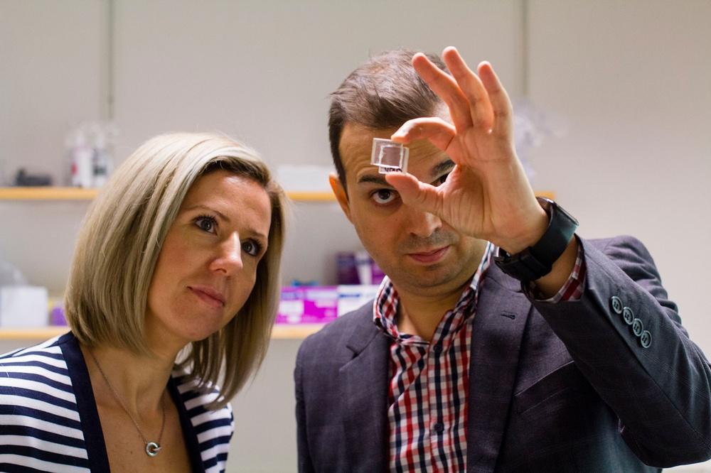 Peafowl, med grundarna Cristina Paun och Jacinto Sá, utvecklar en unik transparent solcell.