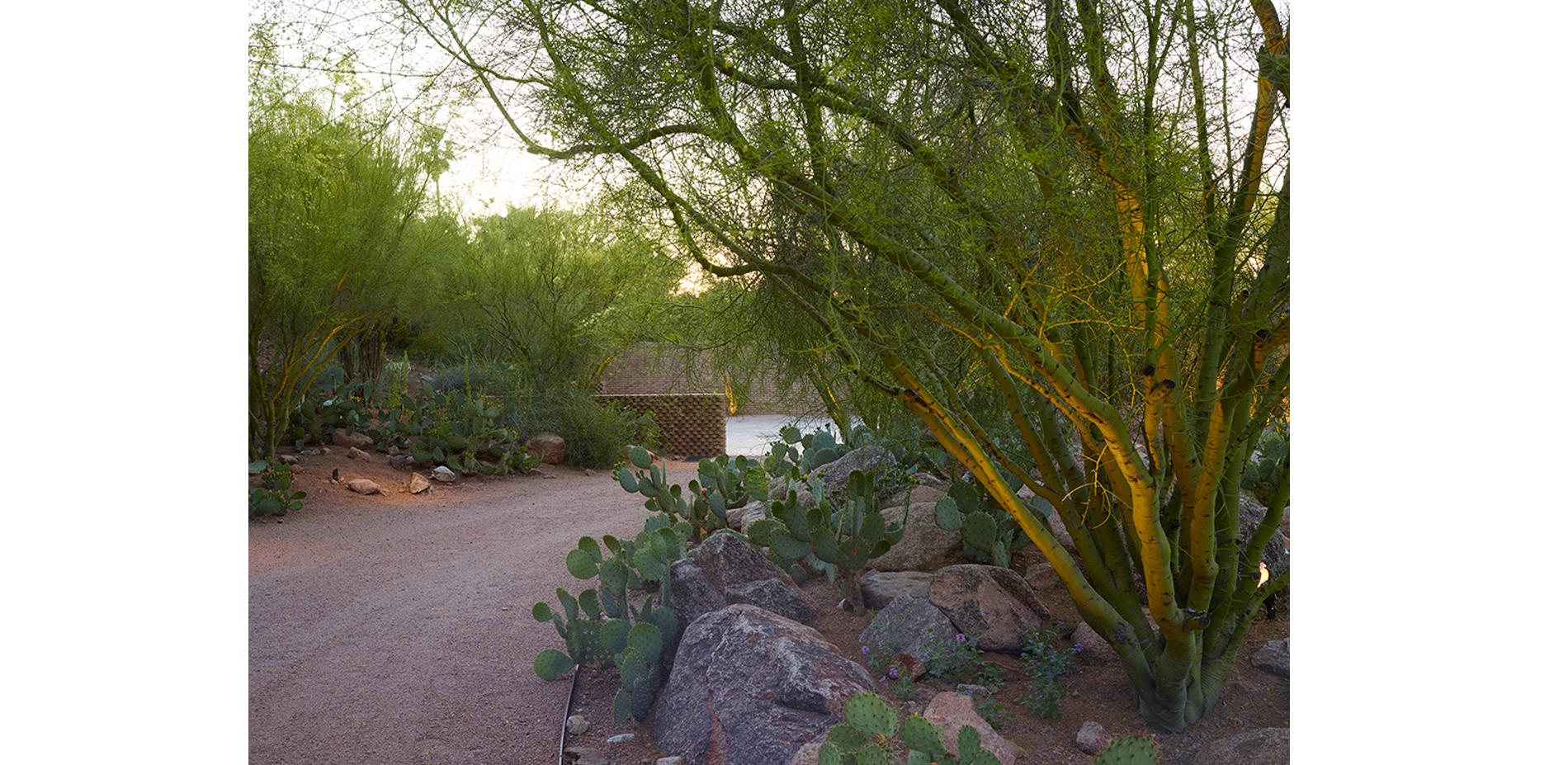 Entry Drive Through Palo Verde Bosque
