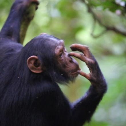 4-Days Rhinos, Chimpanzees Tracking & Murchison Falls National Park Adventure - Mid-range Safari