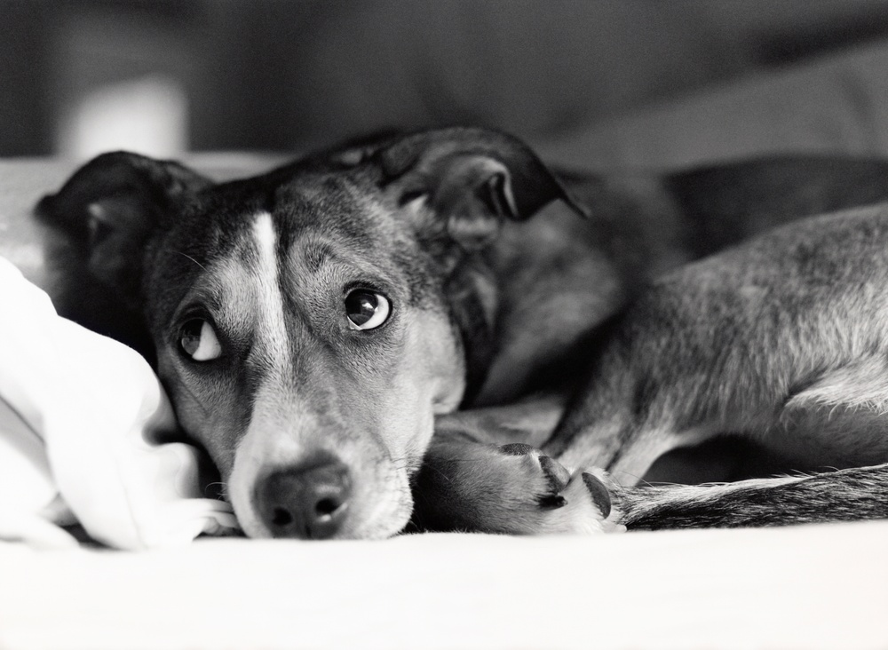 Nu föreslås hårdare straff för djurplågeri. Foto: Istock