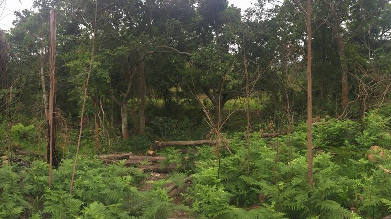 Cotswold Fenns wetlands