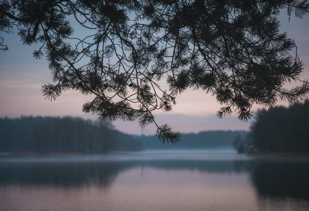 Tall i förgrunden med utsikt över en sjö i dimma.