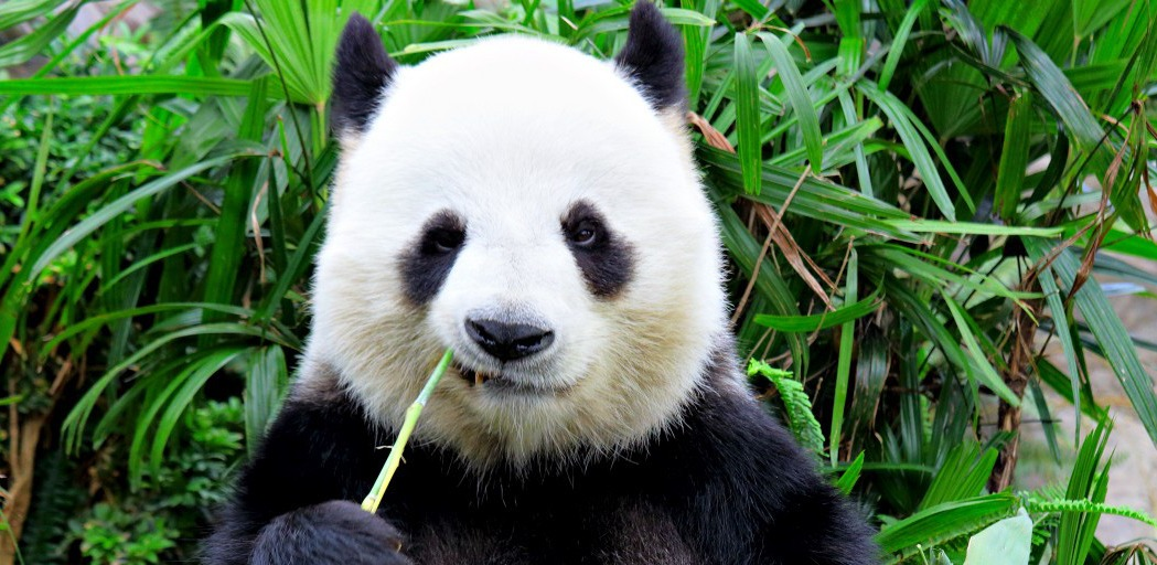 4 Strategies to Deal With Large Datasets Using Pandas