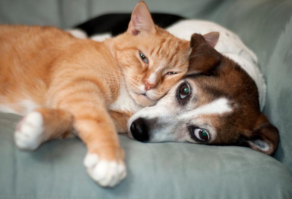 Djurskyddet stärks för hundar och katter.