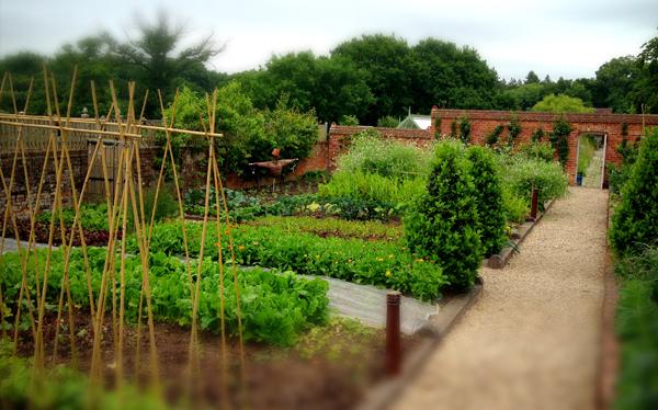 Pig Brockenhurst garden