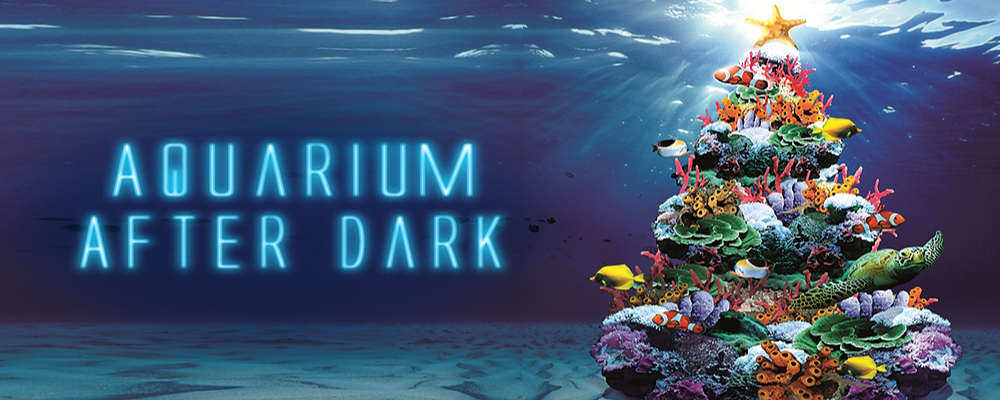 Aquarium After Dark - Christmas Edition Event Banner