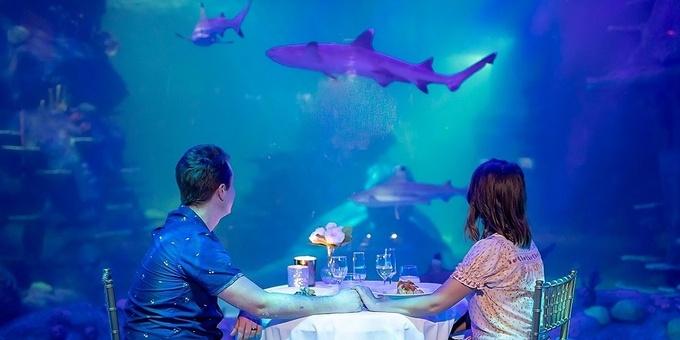 Friday 15th February Valentine's Dinner - SEA LIFE Sydney Aquarium Event Banner