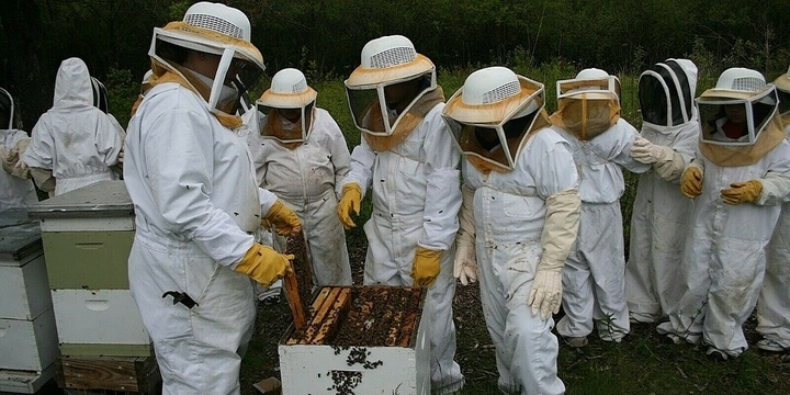 URBAN BEEKEEPING COURSE FOR BEGINNERS Event Banner
