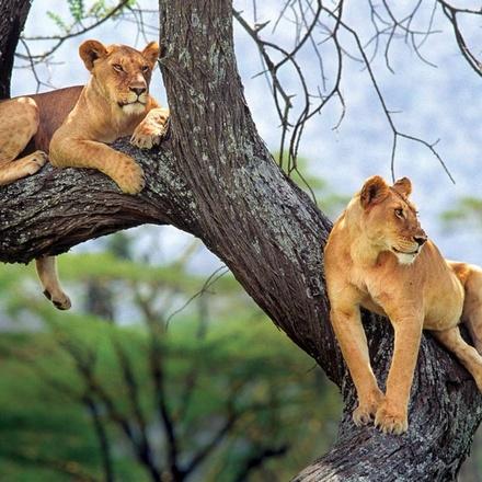 5 Days Tanzania Wildlife Safari | Lodge Safari