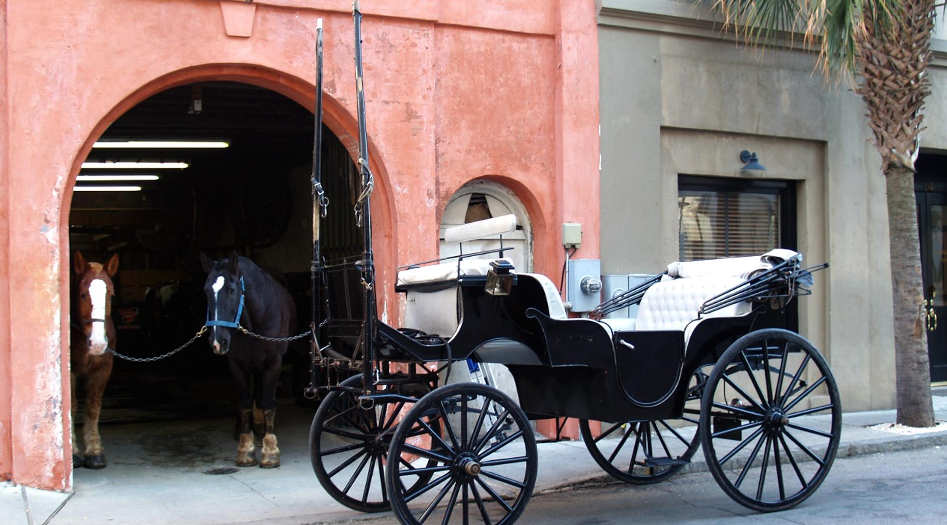 30 Minute Horse and Carriage Ride