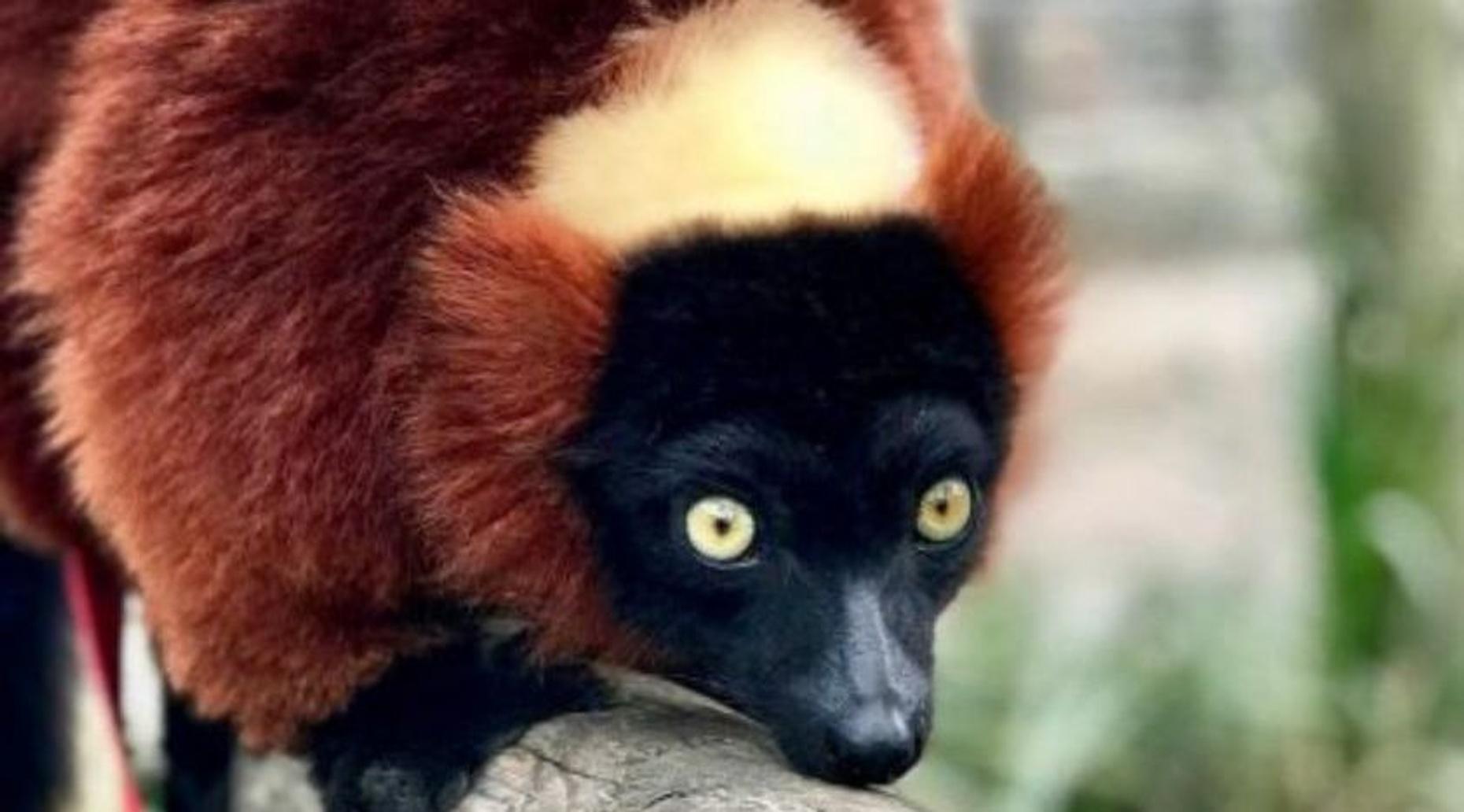 Primate Encounter
