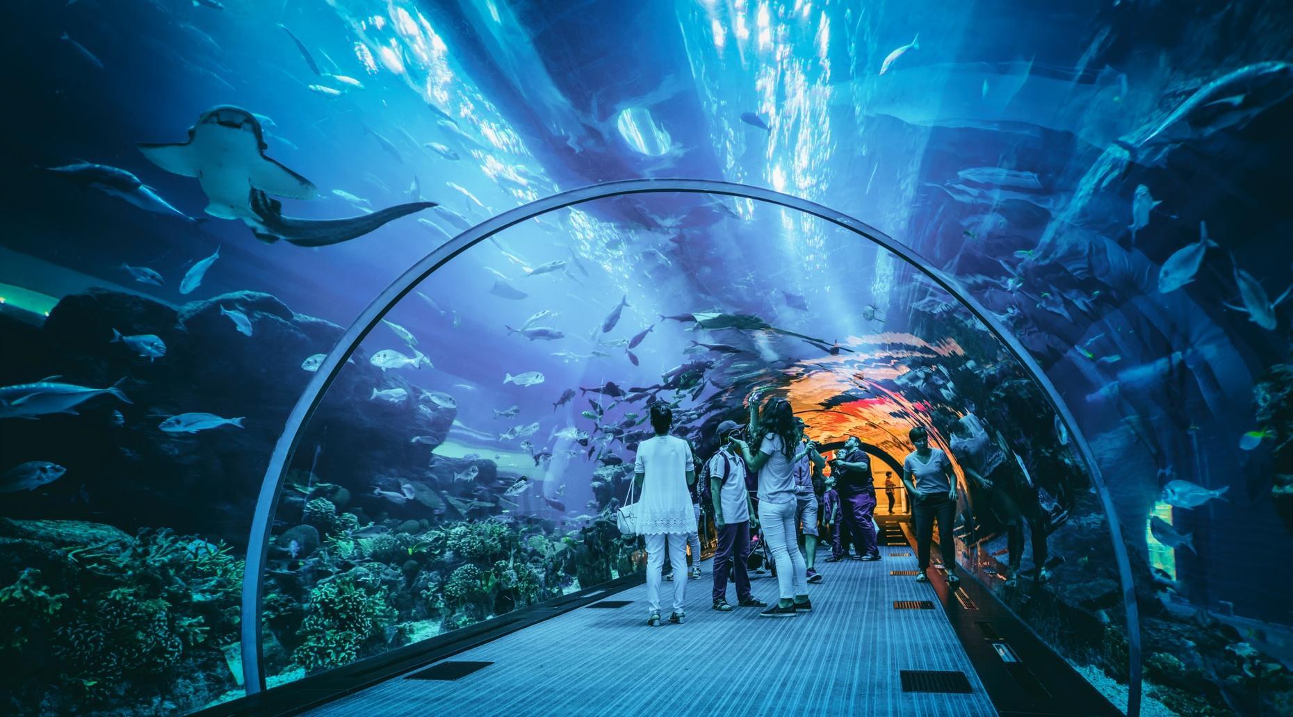 Georgia Aquarium Tour in Atlanta