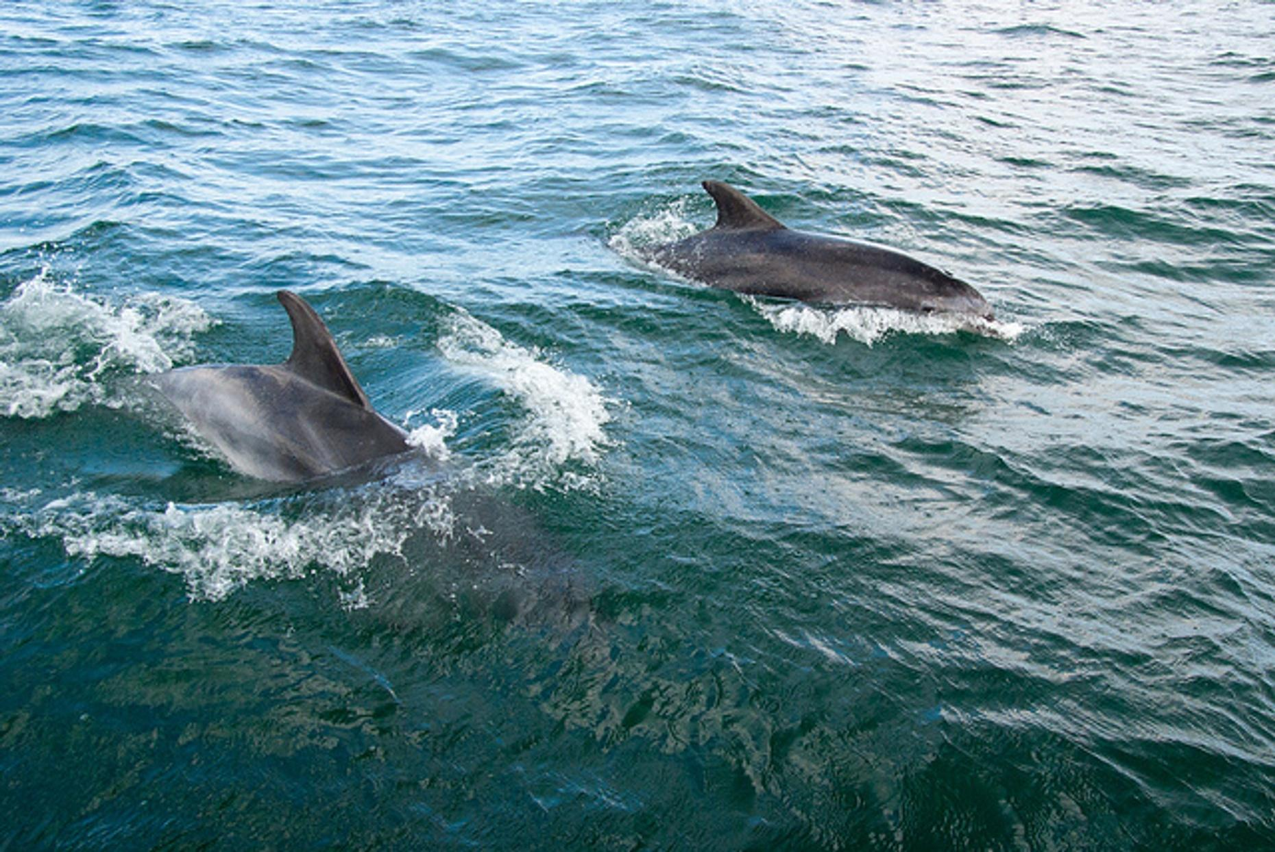 One Hour Dolphin Sightseeing Tour on Naples Bay
