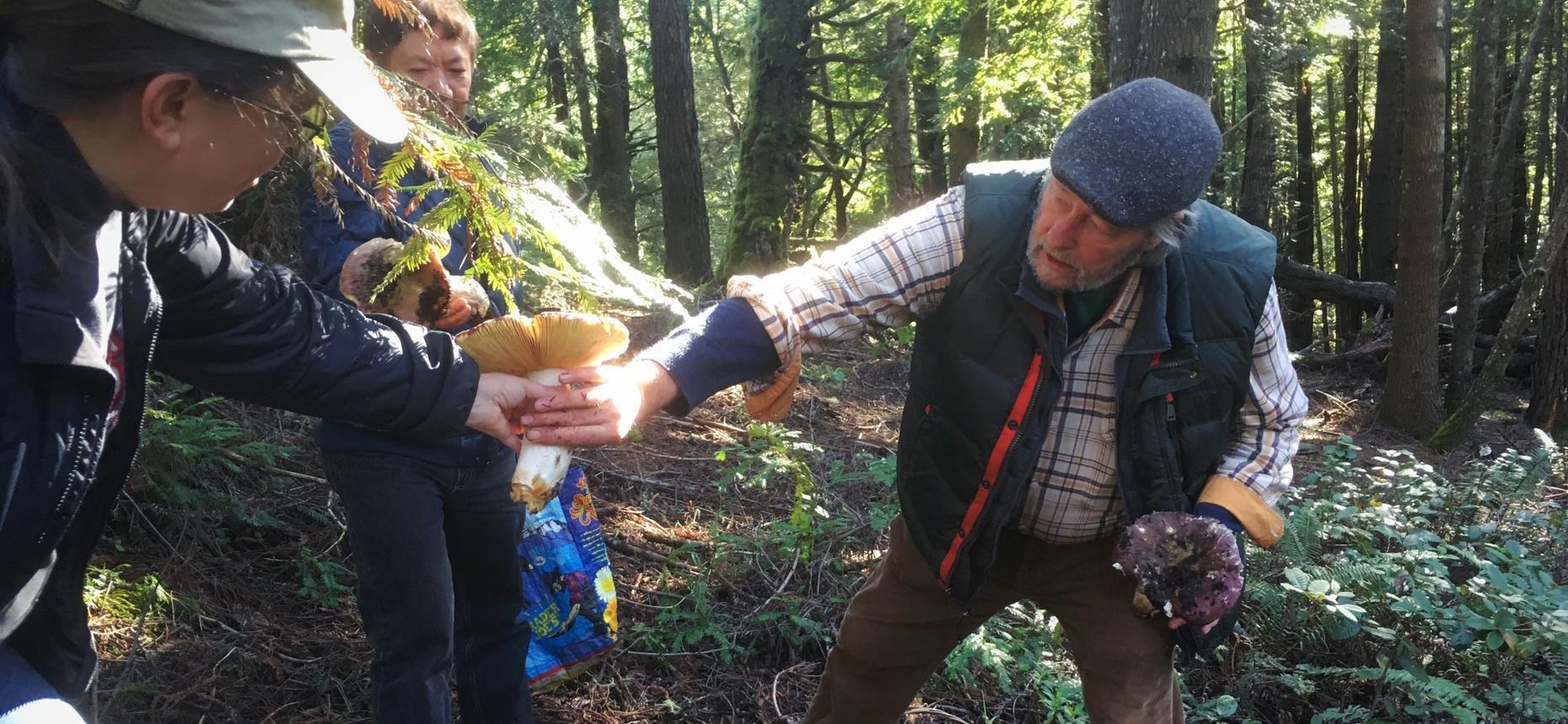 Half-Day Mushroom Foraging Adventure in Sonoma