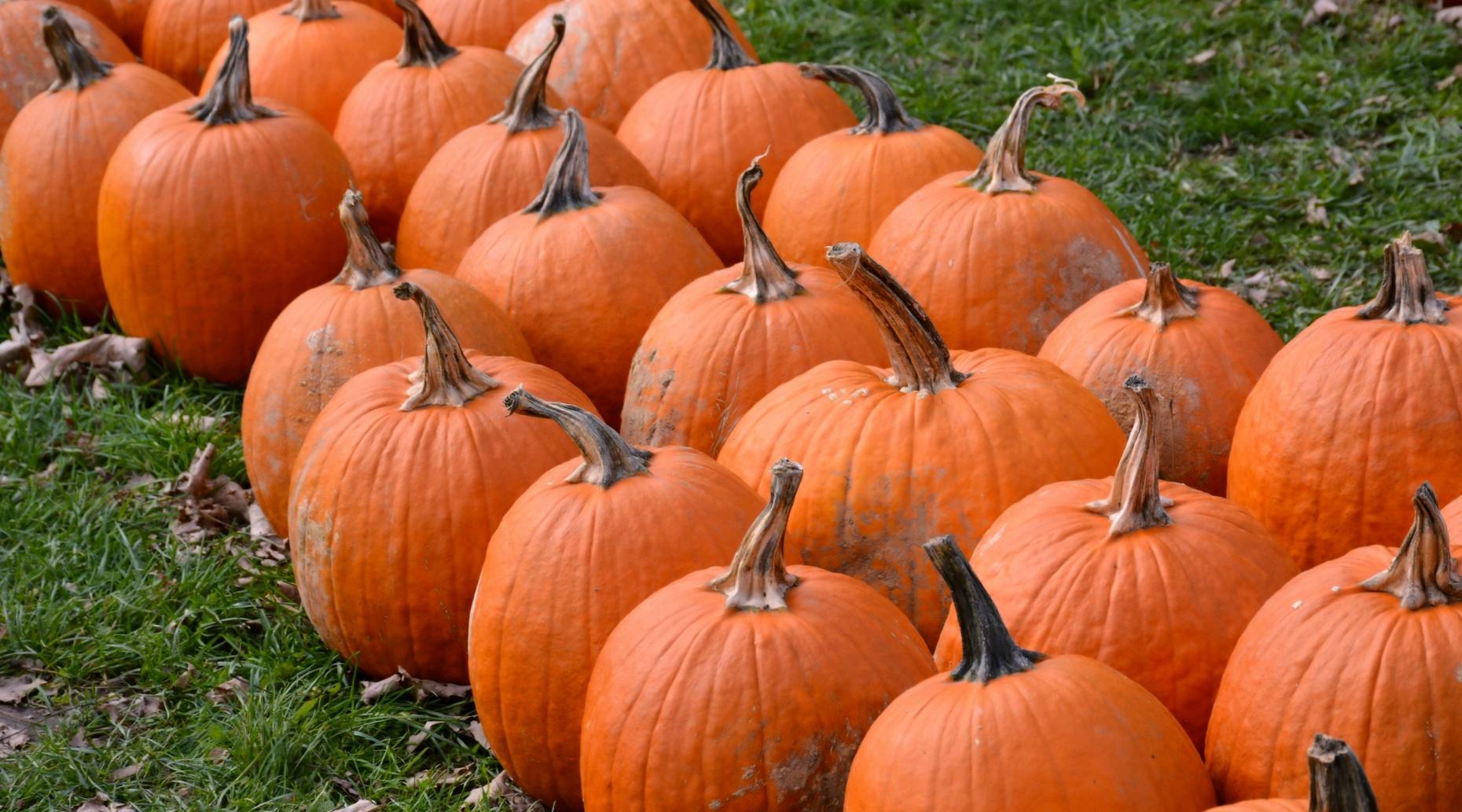 Pumpkin Patch Trip in Provo