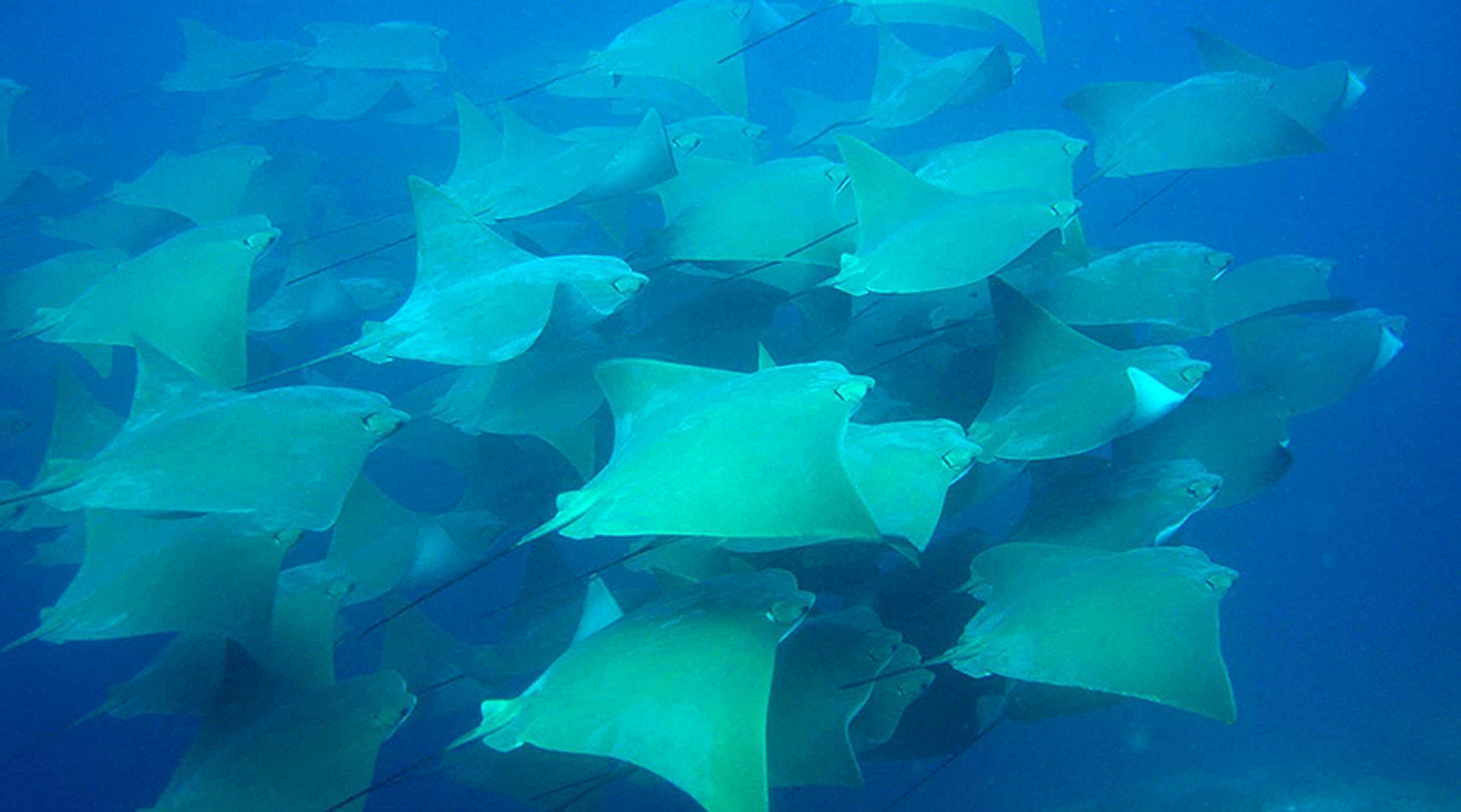 Sea of Cortez Coastal Scuba Dive