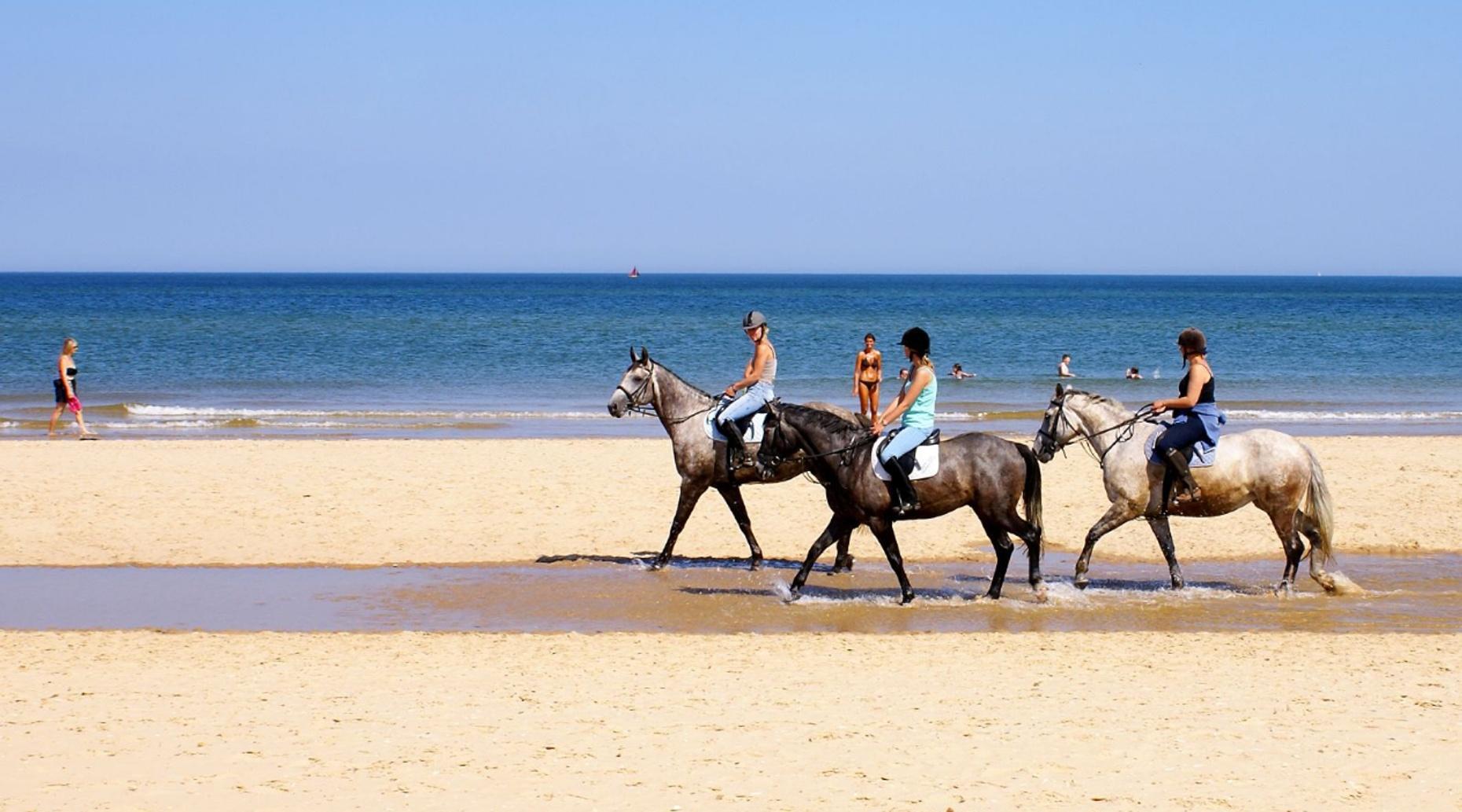 Three Hour Jacksonville Horseback Ride
