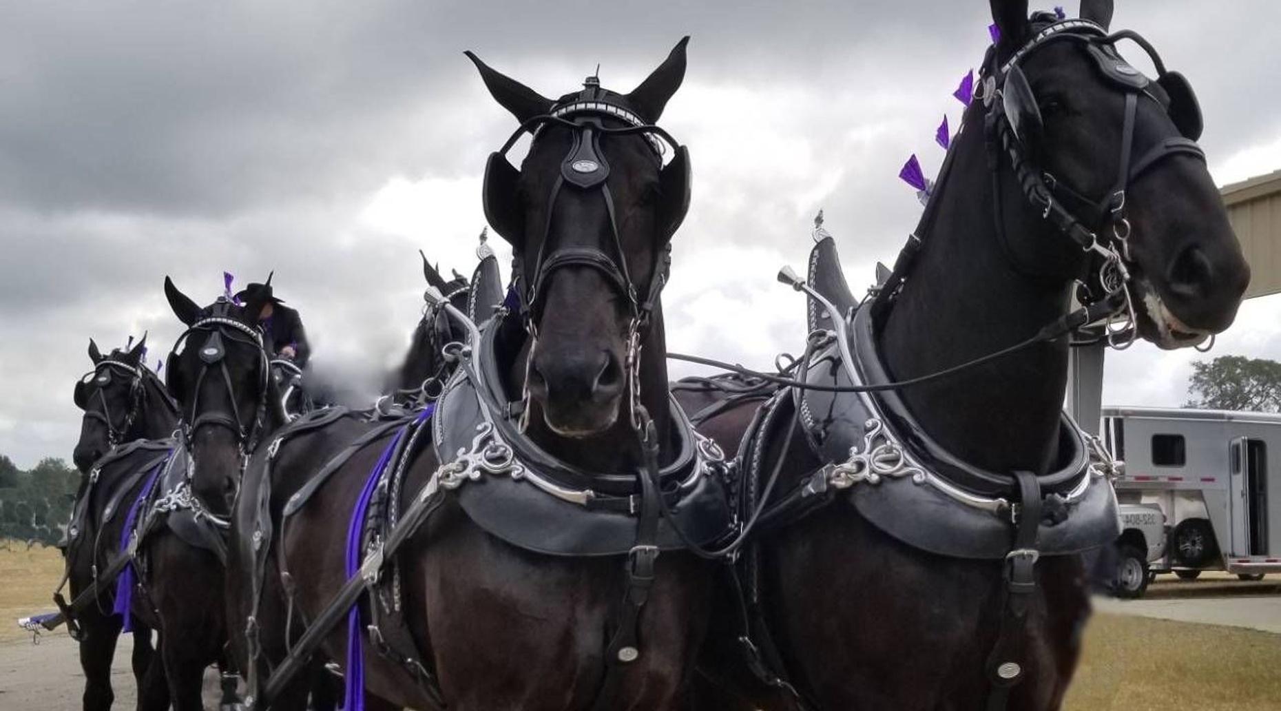 Grandview Invitational  Draft Horse Show