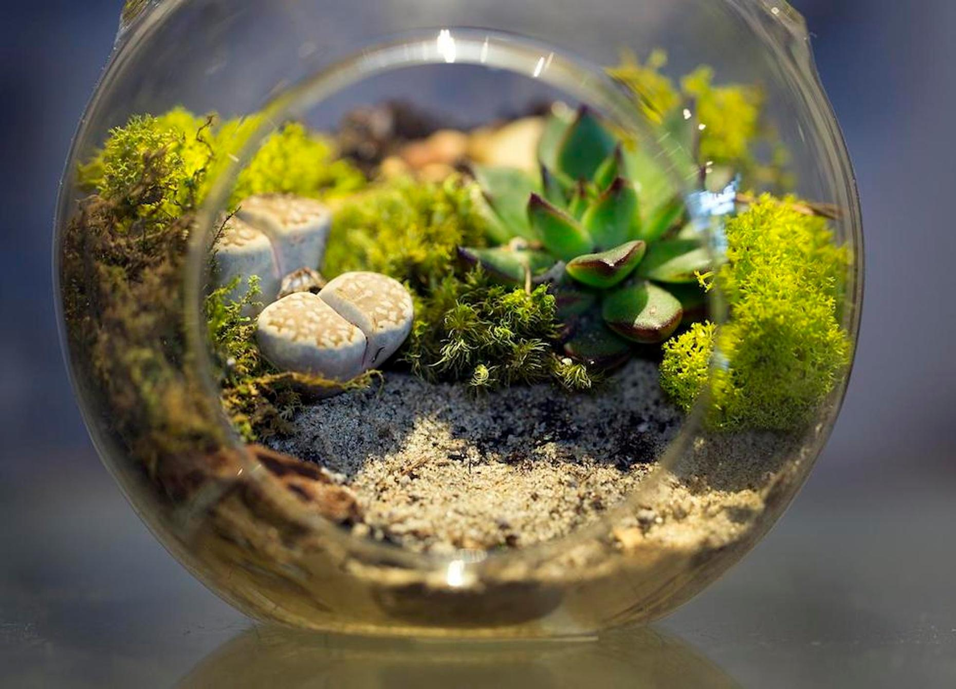Guided Terrarium-Making Class in Westwood