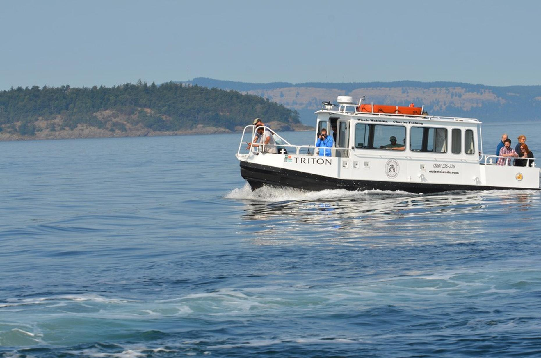 Whale Watching Tour in Anacortes