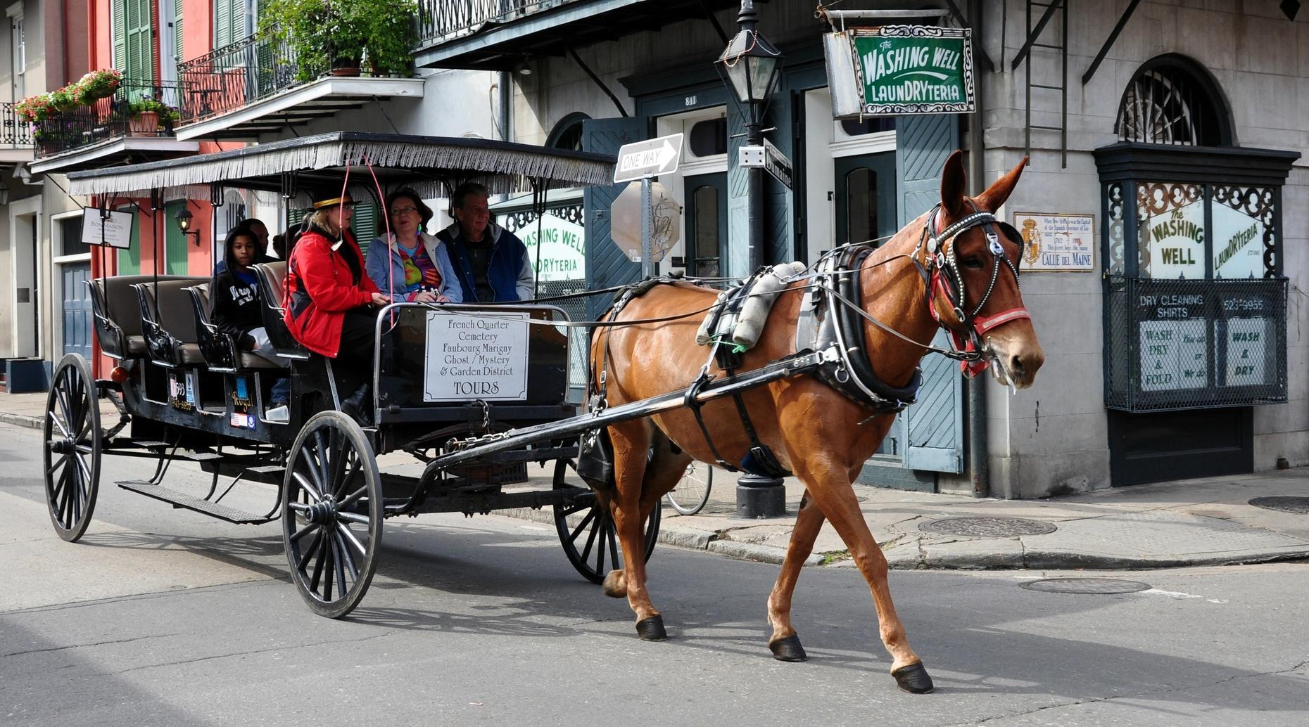 Victoria Carriage Ride in Camden