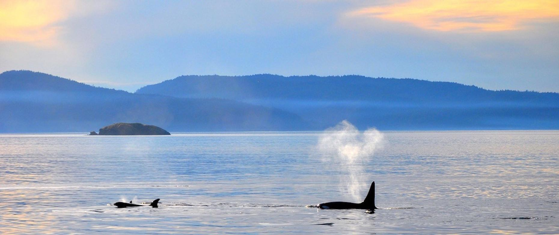 Whale Watching Tour from Lummi Island