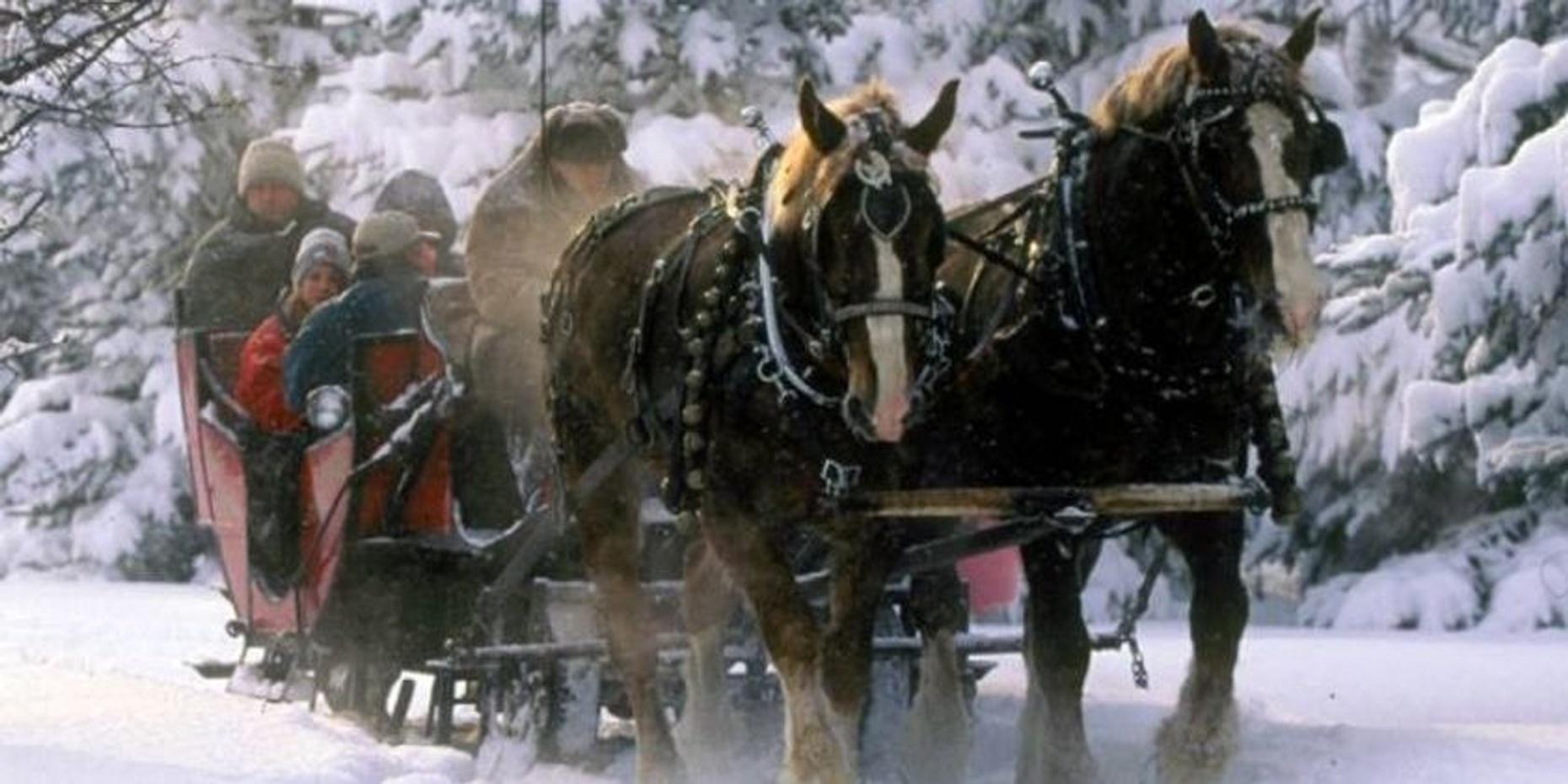 Austrian Sleigh Ride for Groups in Jackson