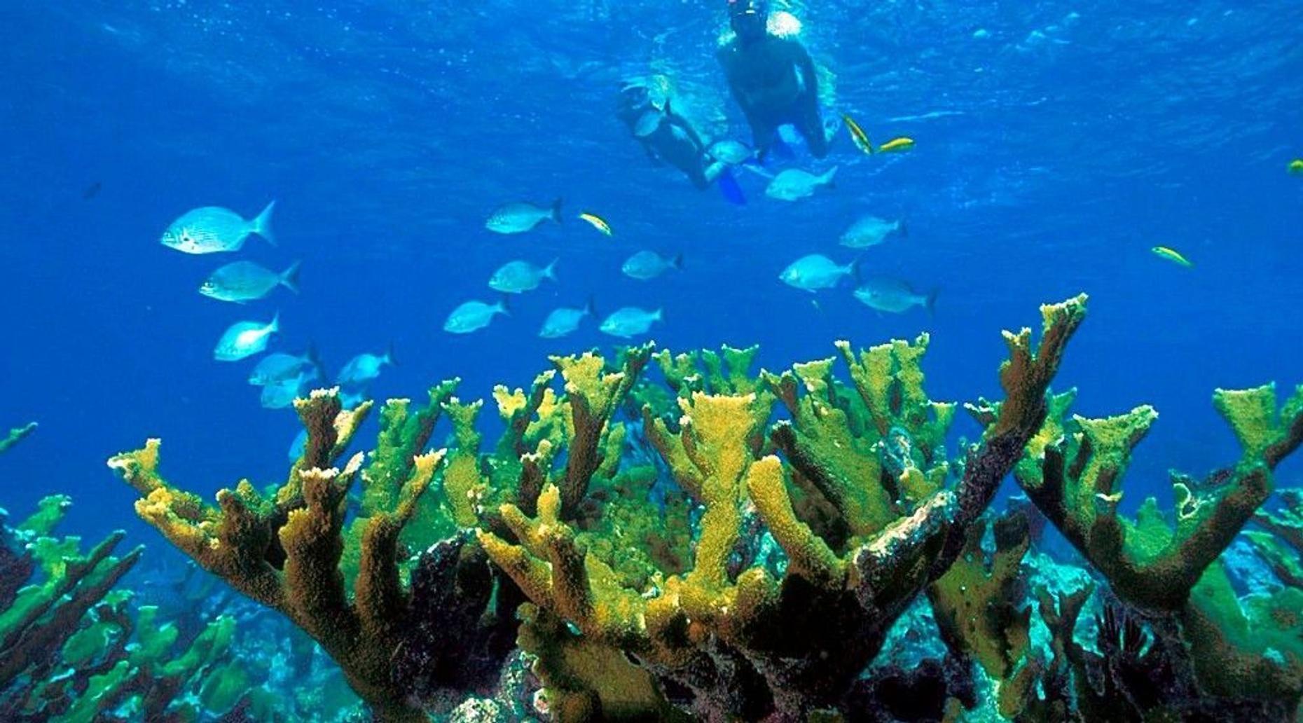 Snorkeling & Beach Day in Cancun