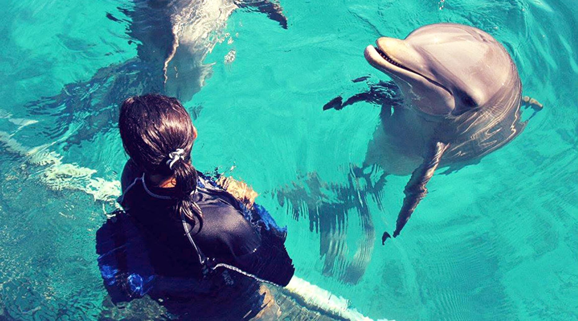 Royal Dolphin Swim Los Cabos