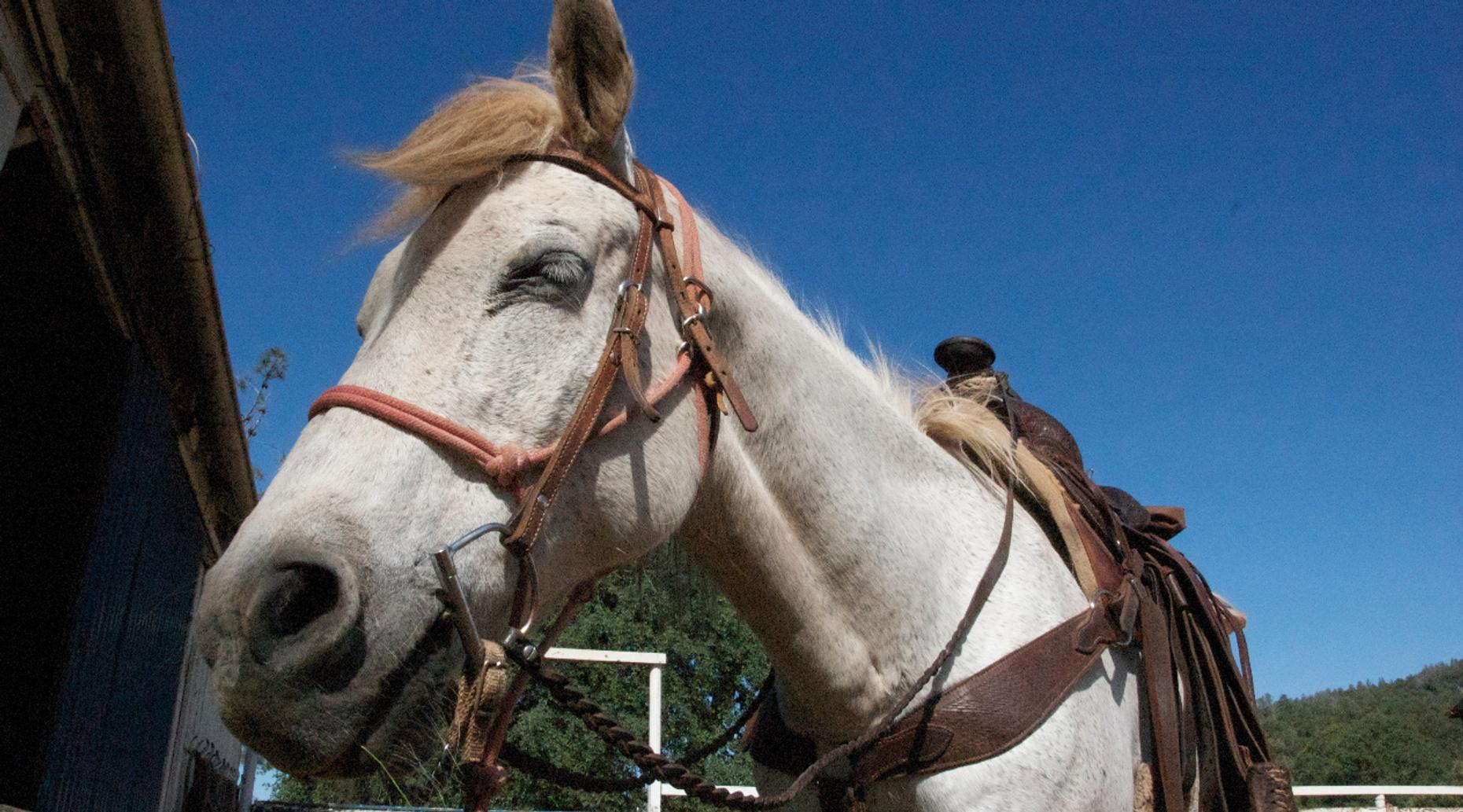 One-Hour Evening Trail Ride in Crowley
