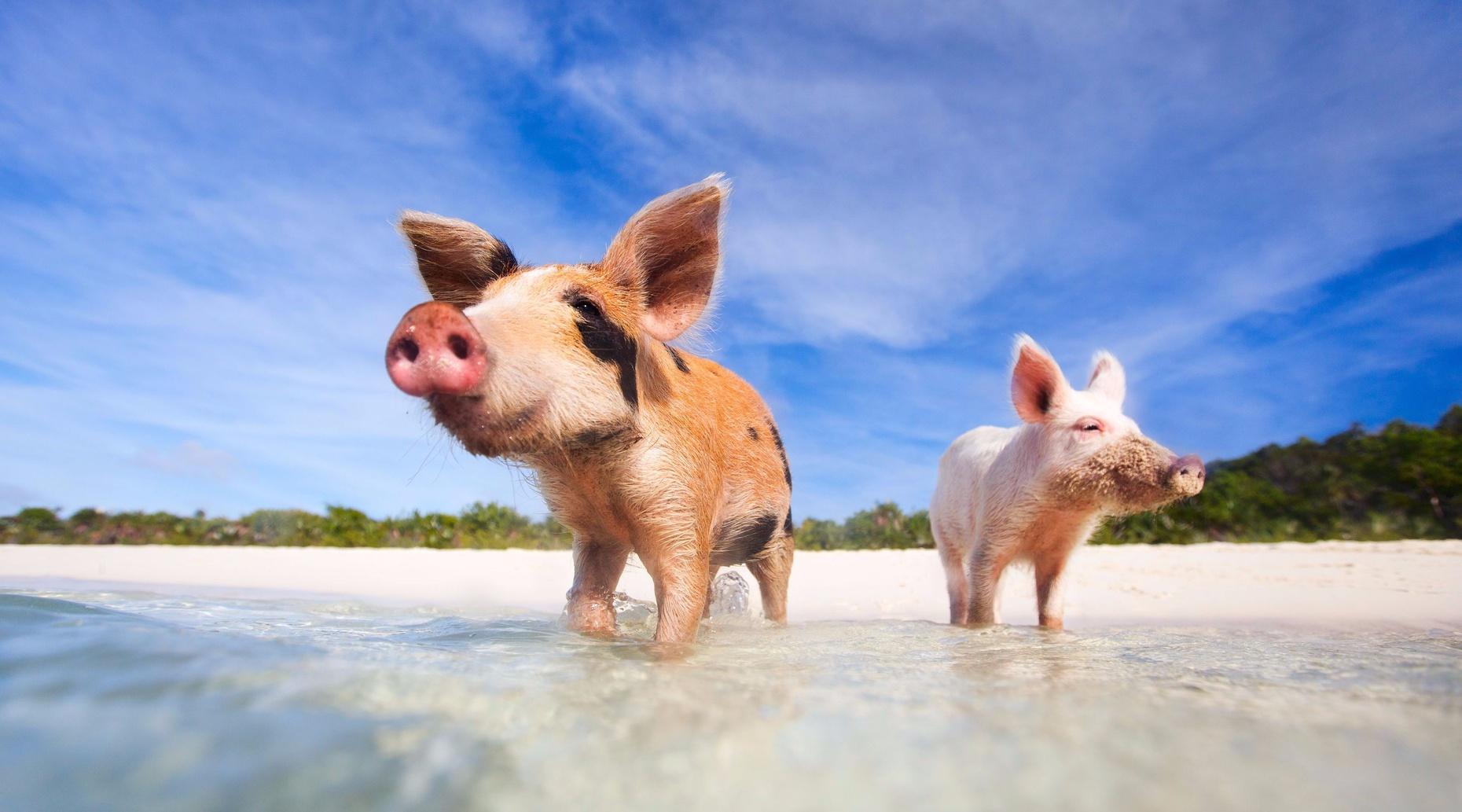 Swimming Pigs Tour from Nassau to Exuma Bahamas