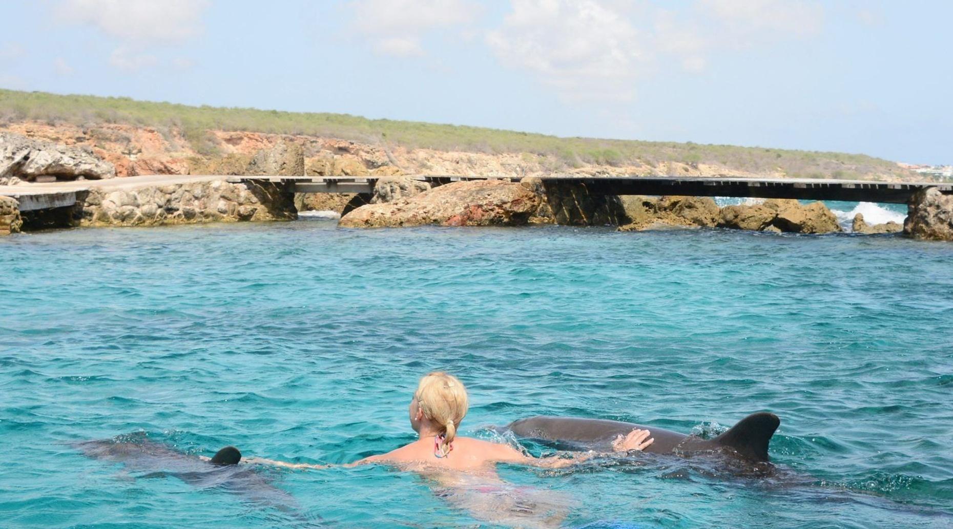 Swim With Dolphins in Bapor Kibrá, Curaçao