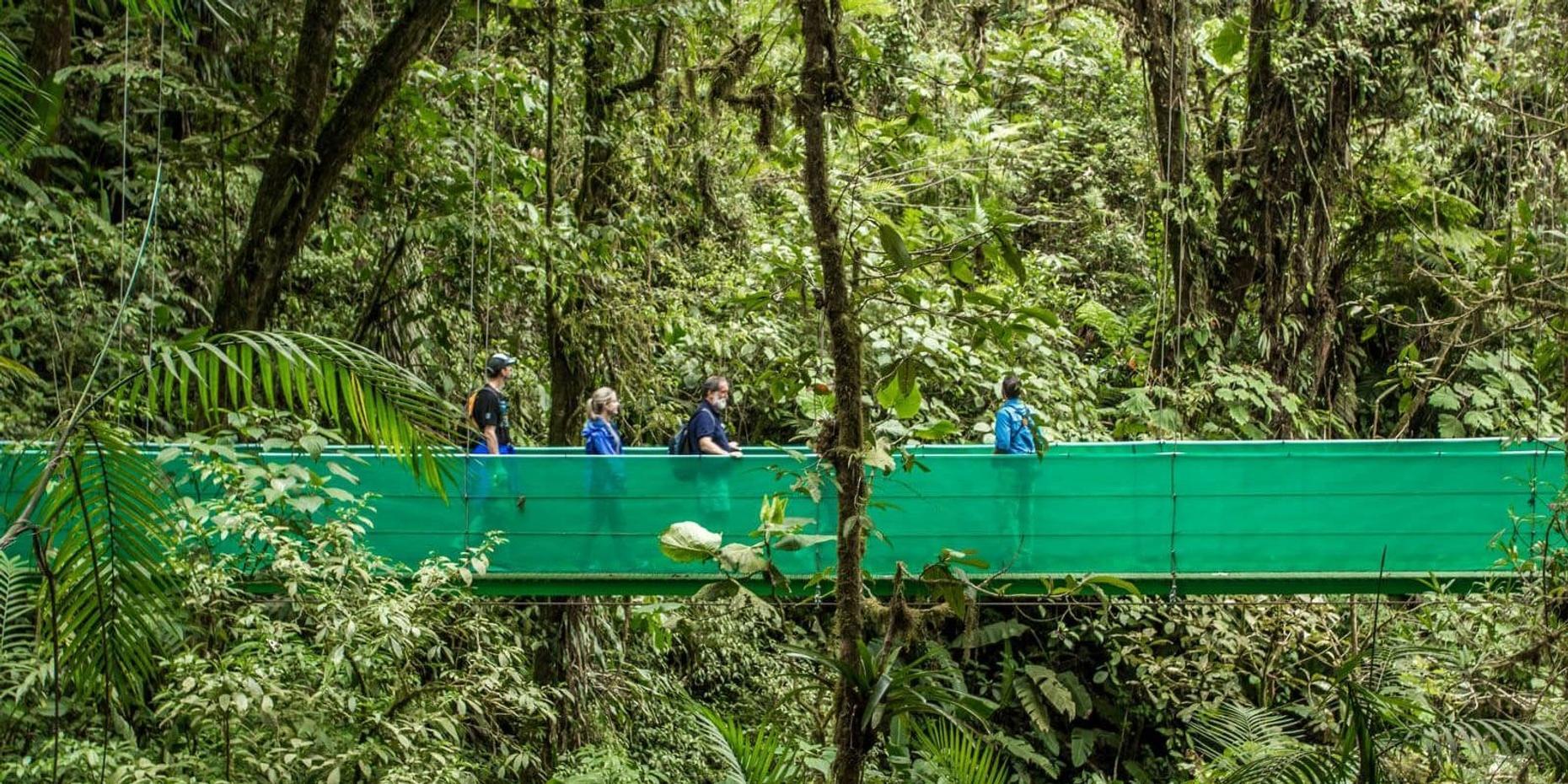 Guided Nature Walk and Suspension Bridge Tour in Monteverde