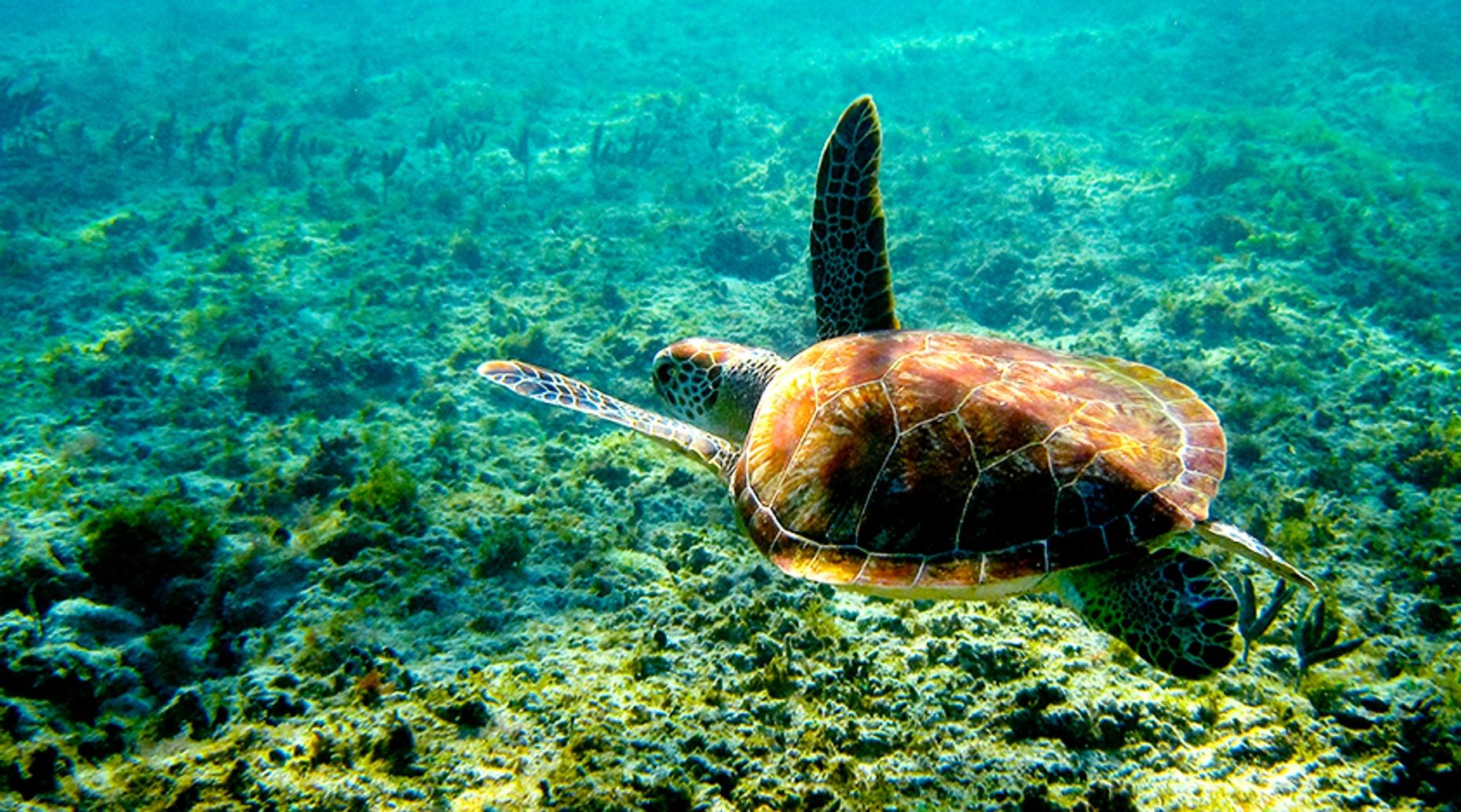 Private Snorkeling & Historical Tour in Cancun