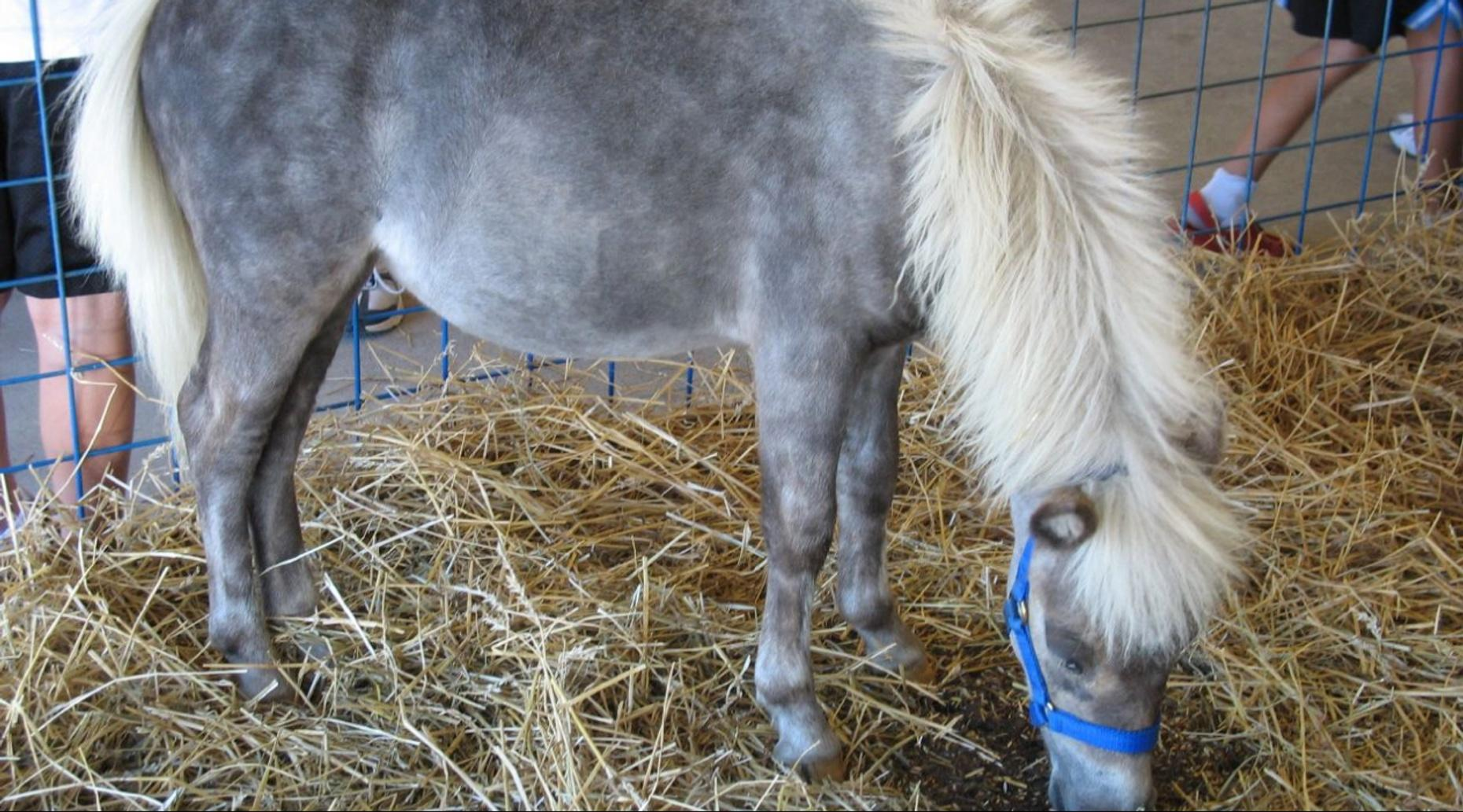 Tour of Petting Zoo with Pony Rides in Redmond