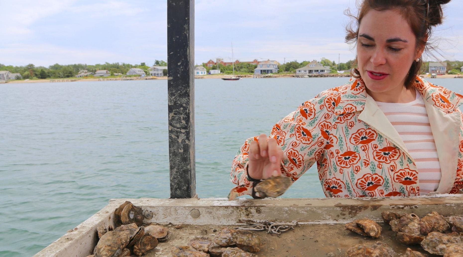 Martha's Vineyard Oyster Farm Tour & Aquaculture Education