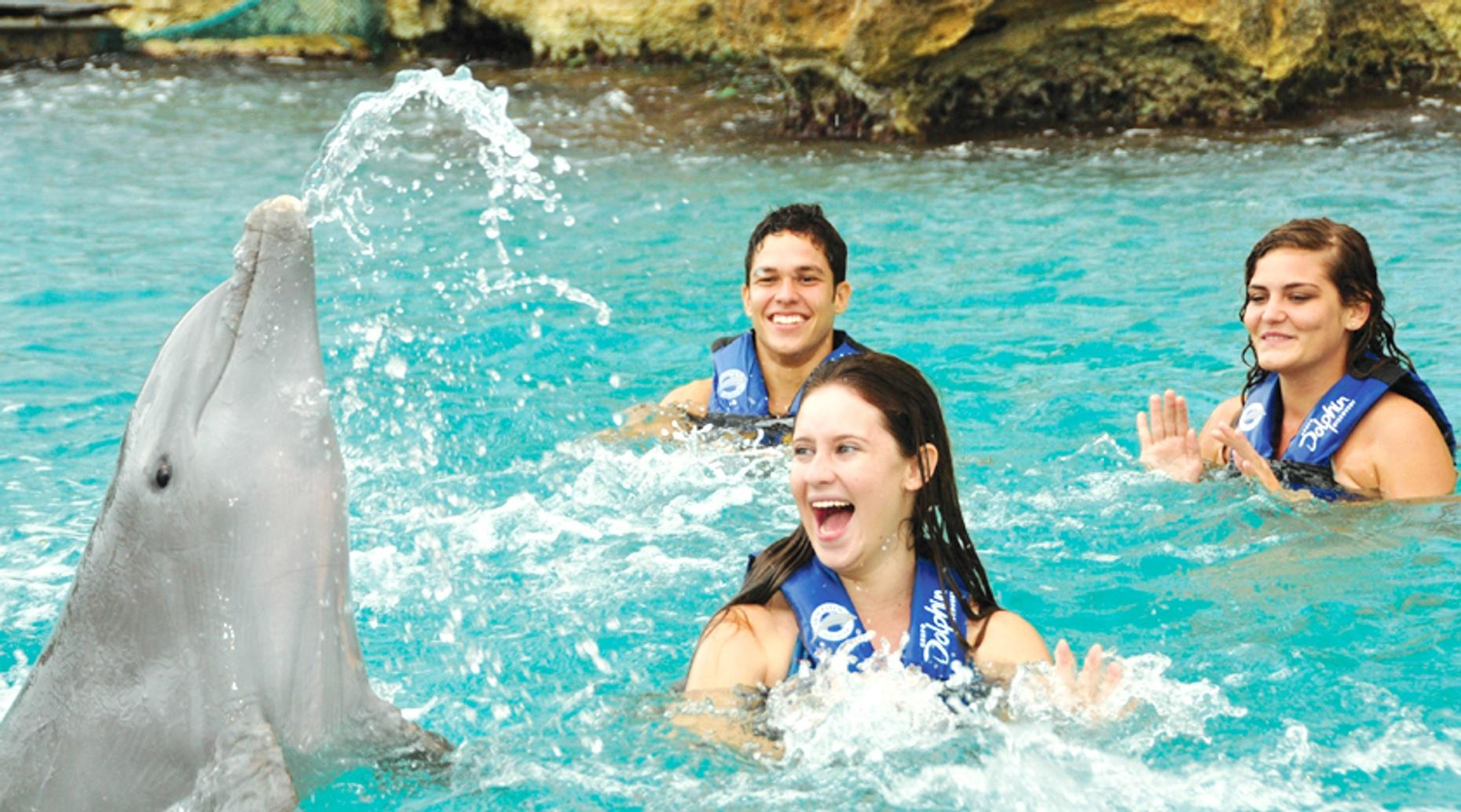 Caribbean Dolphin Encounter