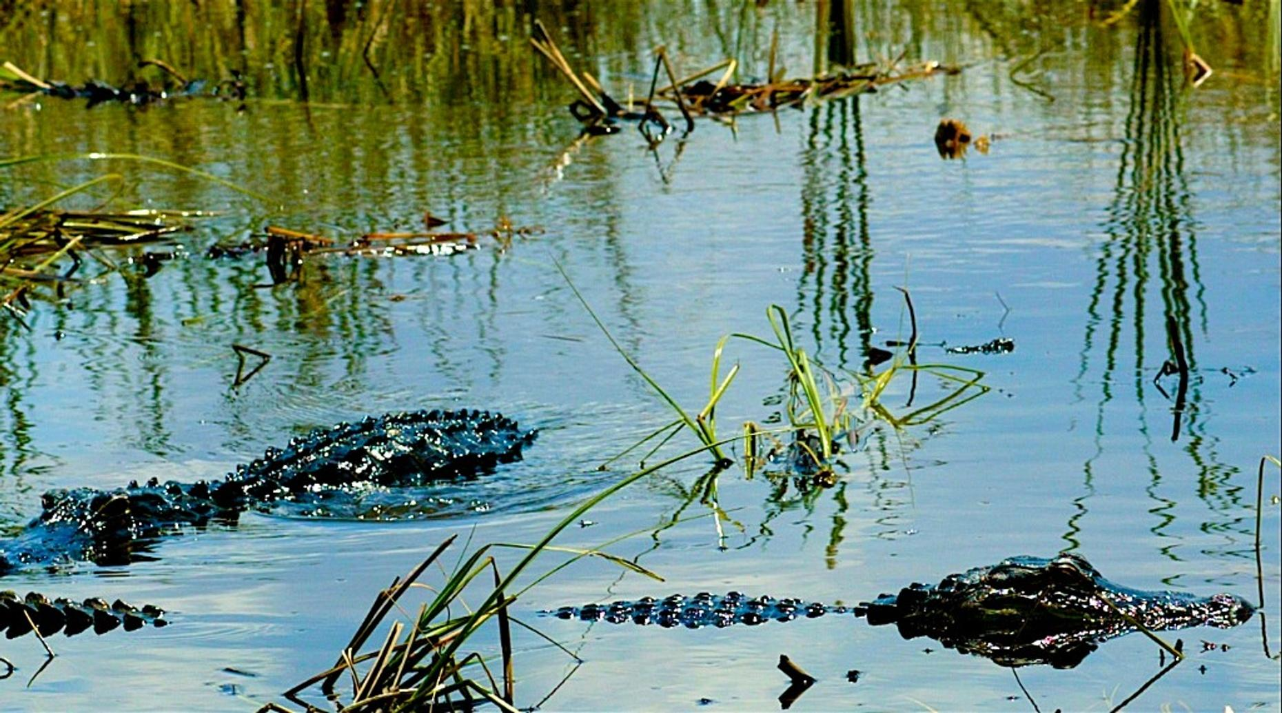 30-Minute Lake Jesup Airboat Ride in Oviedo