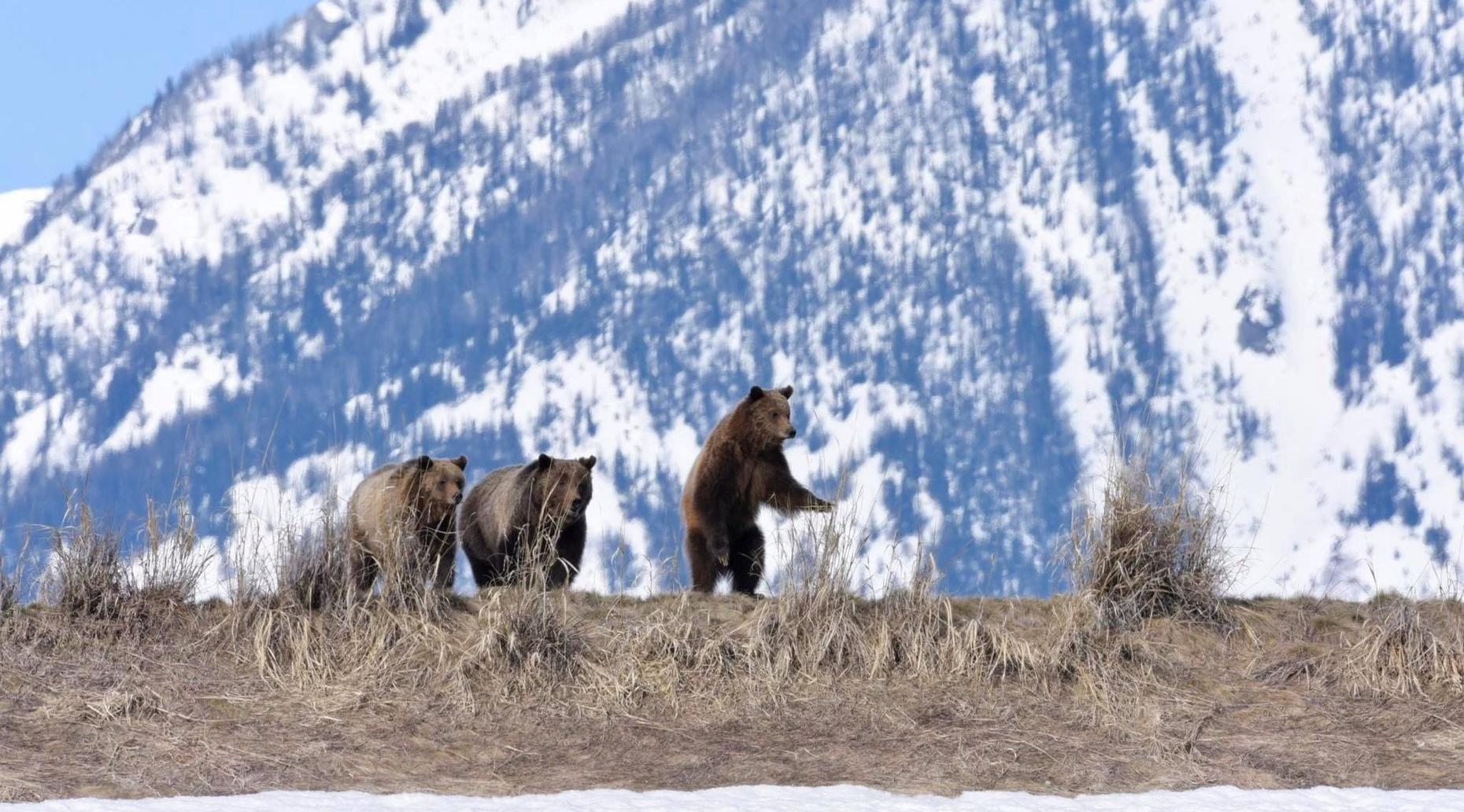 Full-Day Yellowstone Tour