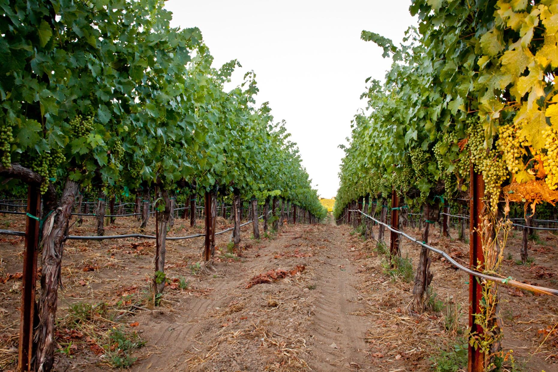 Coastal Wine Tour in California