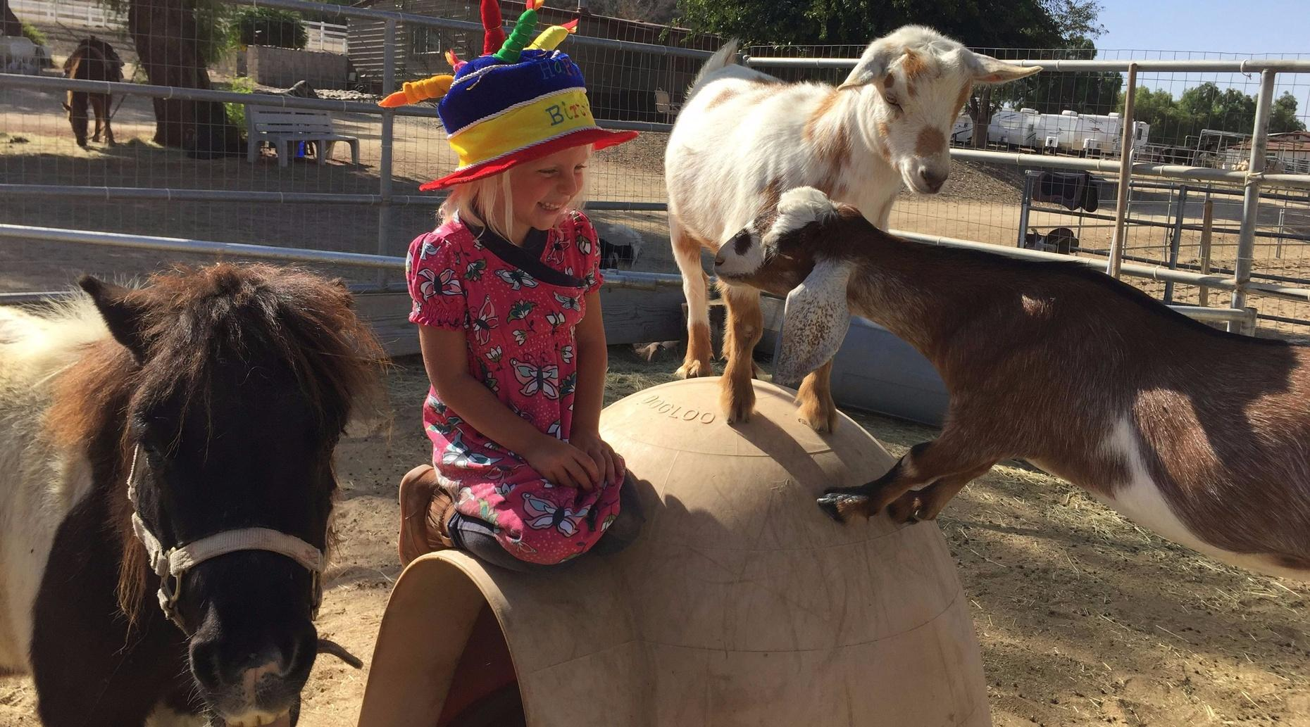 Pony Ride & Petting Zoo in Murrieta