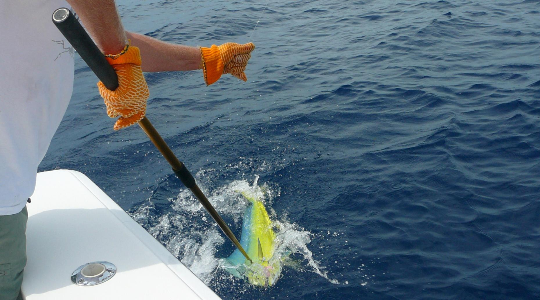 Four-Hour Private Sportfishing Charter in Hollywood