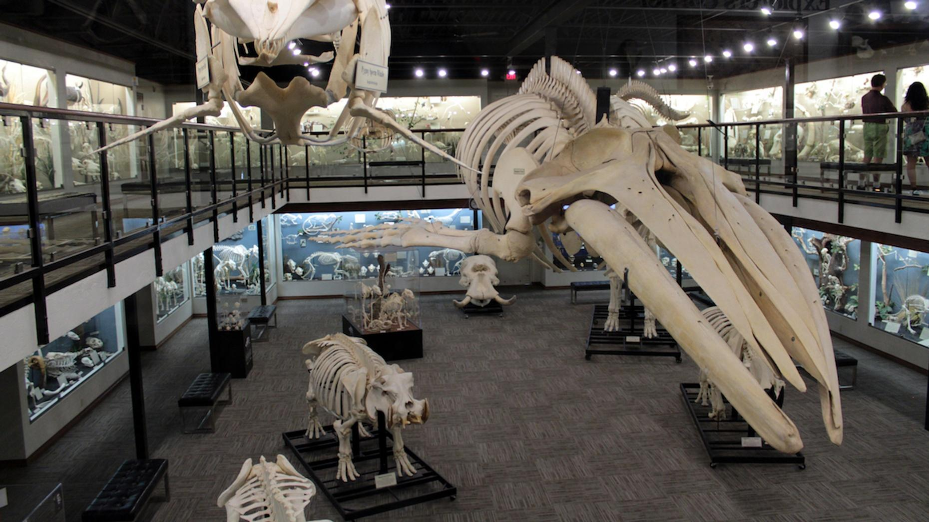 Museum of Osteology General Admission in Oklahoma City