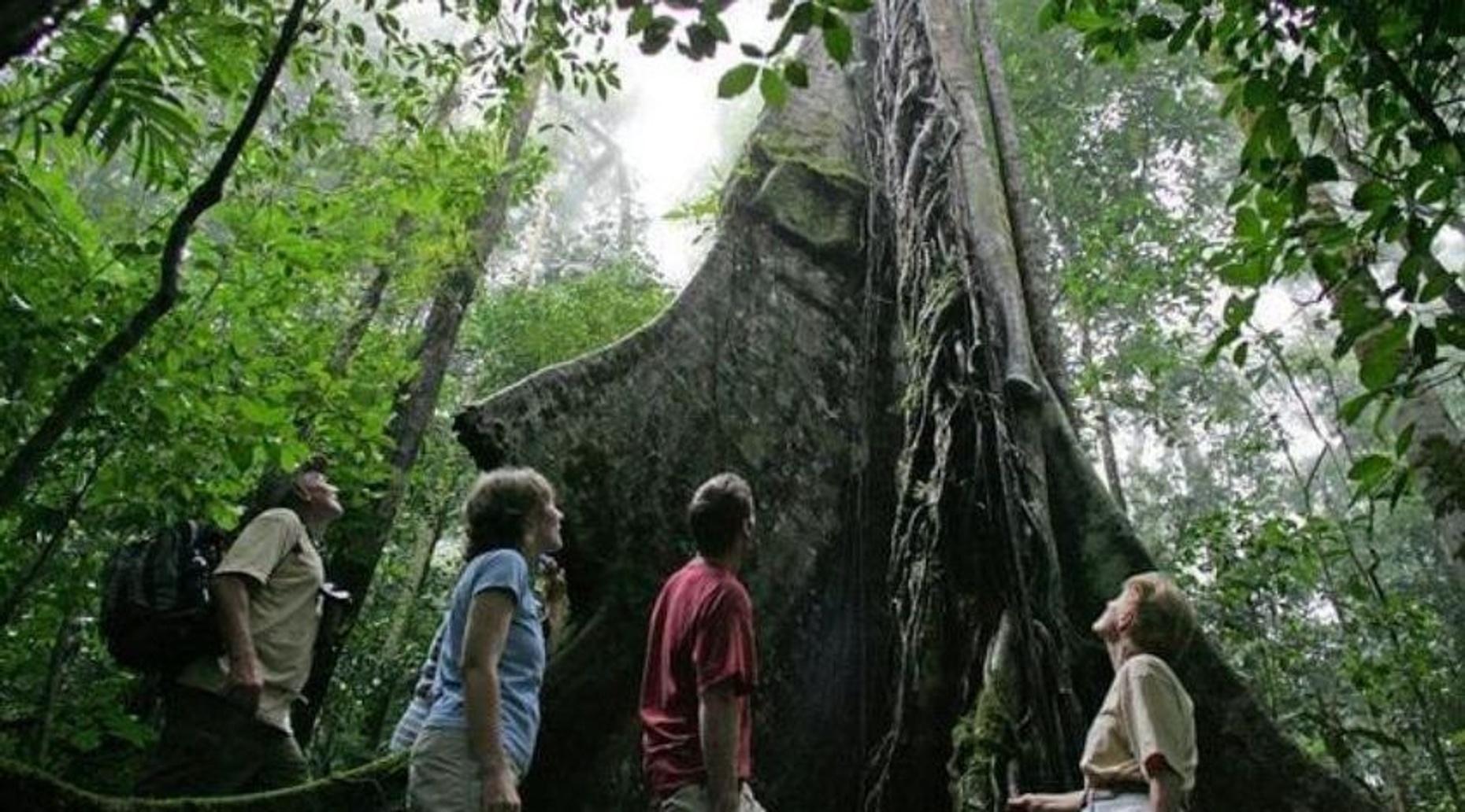 Braulio Carrillo Natural Park Hiking Tour