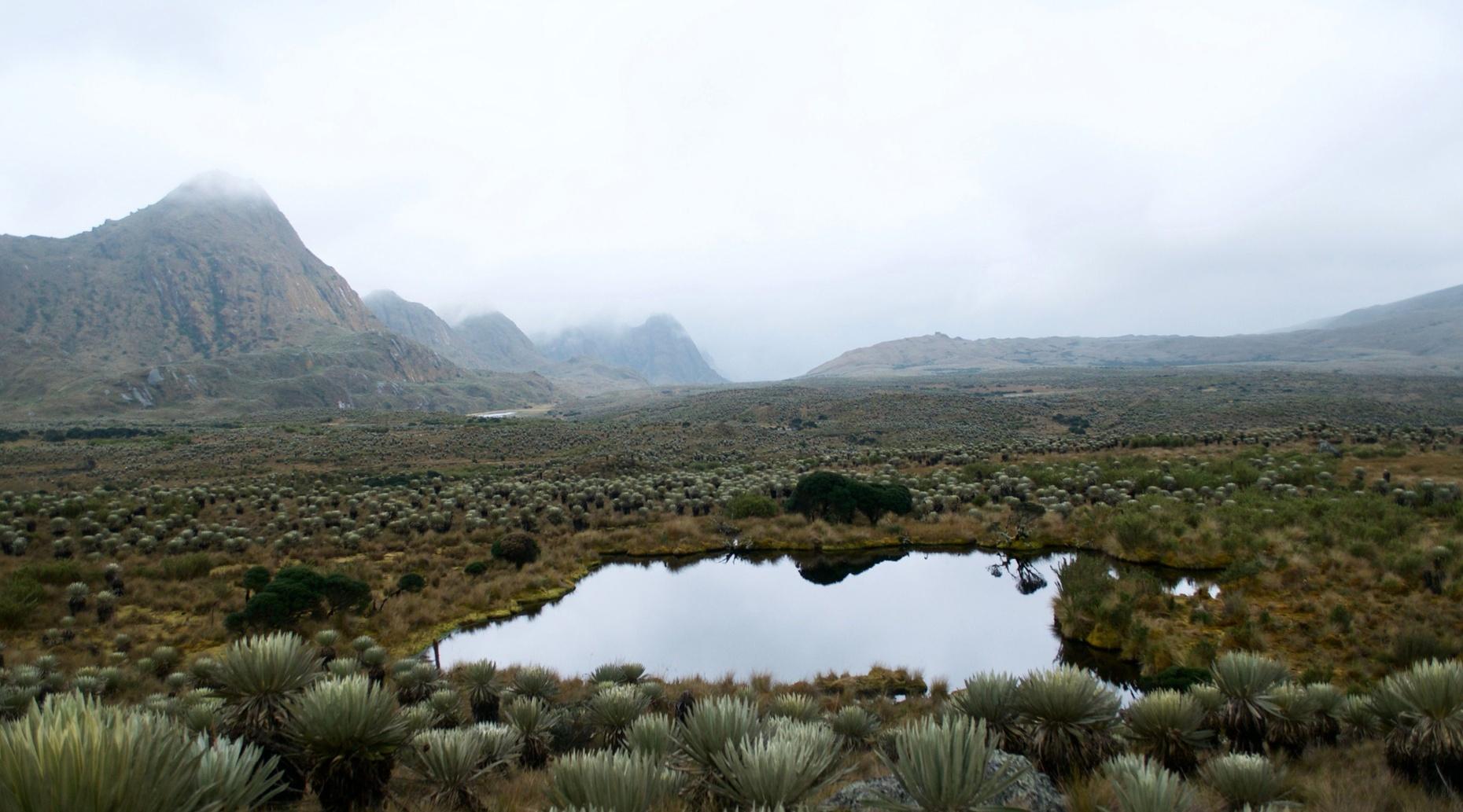 Full-Day Hiking Tour to Sumapaz
