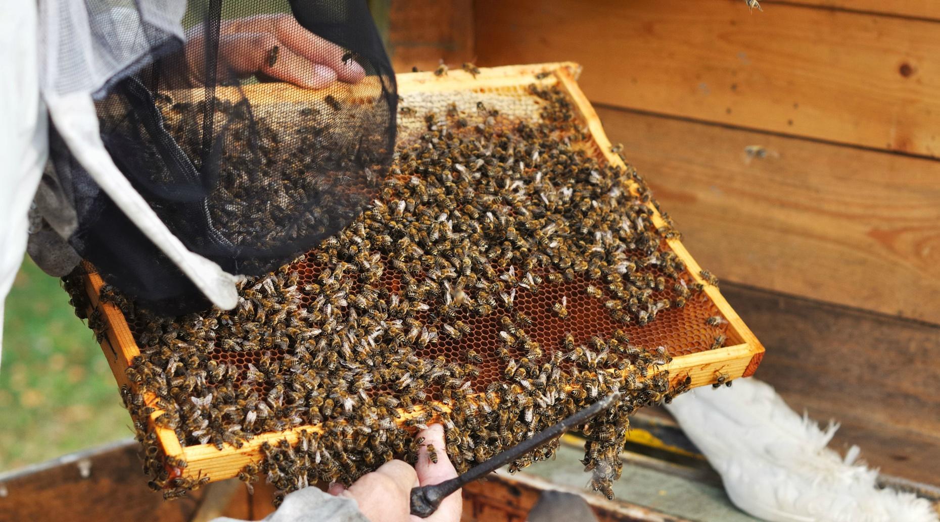 Intermediate Beekeeping Class in Canyon